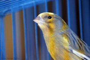 Buying A Birdcage: Crucial Tips You Should Consider