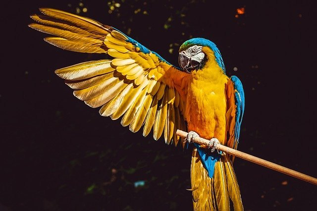 What do parrots eat 12 Best List Of Foods Explained Here!