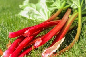 How To Freeze Rhubarb The Best Way In 4 Steps Explained